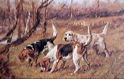 Der Beagle 1